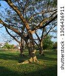 autumm nature public park and...   Shutterstock . vector #1306436911