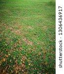 fallen autumn leaves on green...   Shutterstock . vector #1306436917