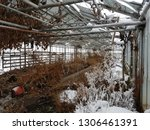 abandoned and neglected...   Shutterstock . vector #1306461391