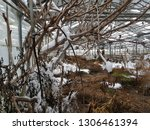 abandoned and neglected...   Shutterstock . vector #1306461394