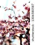 in full bloom in the peach... | Shutterstock . vector #1306580587