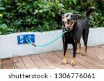 Stock photo dog leashed at designated dog parking area of shopping mall in hong kong 1306776061
