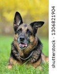 portrait of an old german...   Shutterstock . vector #1306821904