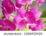 orchid flower in garden   Shutterstock . vector #1306925434