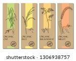 vector set of cereal labels...   Shutterstock .eps vector #1306938757