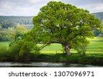 Lonely Tree In Ireland