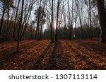 beautiful deciduous trees in... | Shutterstock . vector #1307113114