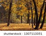 beautiful deciduous trees in... | Shutterstock . vector #1307113351