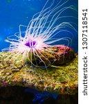 sea anemone  tube anemone  copy ... | Shutterstock . vector #1307118541