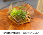 icosahedron glass pot for small ... | Shutterstock . vector #1307142664