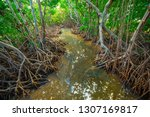 Mangroves Tree. Florida. Usa.