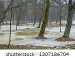 spring thaw in the foggy park ... | Shutterstock . vector #1307186704