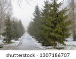 spring thaw in the foggy park ... | Shutterstock . vector #1307186707