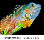 Colorful Iguana On Black...