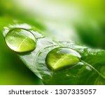 Macro Large Raindrops On A Lea...
