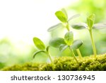 young sprout in springtime... | Shutterstock . vector #130736945