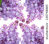 Lilac Flower Bunch Isolated On...