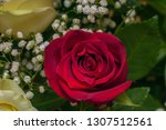 red rose in a bouquet on a...   Shutterstock . vector #1307512561