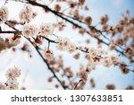 beautiful nature scene with... | Shutterstock . vector #1307633851