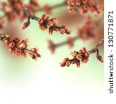 Spring blossom tree on a green background. - stock photo