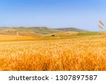 hilly landscape with wheat... | Shutterstock . vector #1307897587