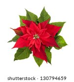 Red And Green Poinsettia Plant...