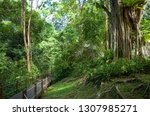 lush jungle trail with exotic... | Shutterstock . vector #1307985271