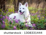 Stock photo white beautiful dog garden spring 1308331444