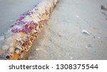 purple barnacle on bamboo pole... | Shutterstock . vector #1308375544