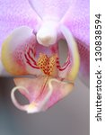 Macro Of Orchid In Bloom