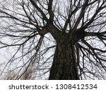 tree. foreshortening from below. | Shutterstock . vector #1308412534