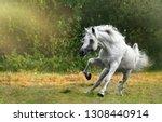 snow white arabian stallion   Shutterstock . vector #1308440914