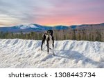 Great Dane Sunset In Mountains