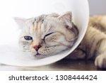 Sick Cat. Cat Wearing A...