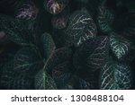 green leaves nature background... | Shutterstock . vector #1308488104