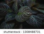 green leaves nature background... | Shutterstock . vector #1308488731
