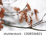 orange leaves on the deciduous... | Shutterstock . vector #1308536821