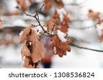 orange leaves on the deciduous... | Shutterstock . vector #1308536824