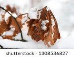 orange leaves on the deciduous... | Shutterstock . vector #1308536827
