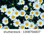 white flowers and bird's eye...   Shutterstock . vector #1308706837
