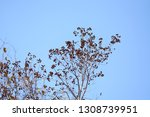 autumn deciduous trees with... | Shutterstock . vector #1308739951
