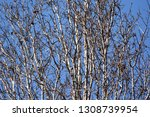 autumn deciduous trees with... | Shutterstock . vector #1308739954