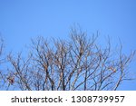 autumn deciduous trees with... | Shutterstock . vector #1308739957