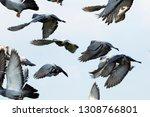 flock of speed racing pigeon... | Shutterstock . vector #1308766801