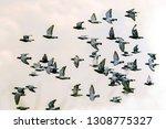 flock of speed racing pigeon... | Shutterstock . vector #1308775327
