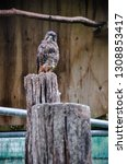 owl standing on a log. from the ... | Shutterstock . vector #1308853417