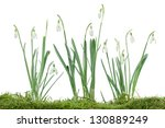 Group Of Snowdrops Flowers On...