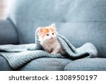 Stock photo cute kitten with scarf sitting on grey sofa 1308950197