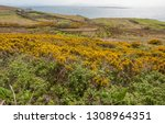 coastal scenery with lots of... | Shutterstock . vector #1308964351