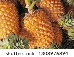 fruit scene of freshness...   Shutterstock . vector #1308976894